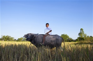 buffalo boy with his mac book by maitree siriboon