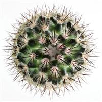 cactus by fabio zonta
