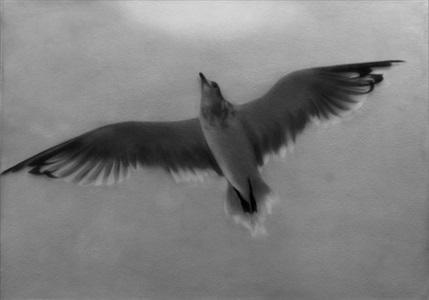 bird overhead by sarah leahy