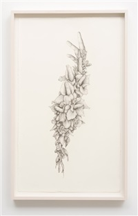 untitled (gladiolas) by aurel schmidt