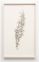 untitled (gladiolas) by aurel schmidt