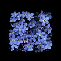 forget-me-not summer by paul kenny