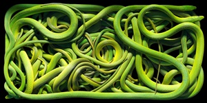 green rough snakes by timothy flach