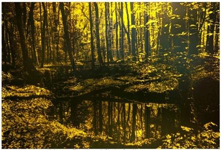 im seeholz by jan davidoff