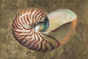 tiger nautilus shell by anne mcgrory