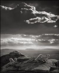 cheetah & cubs lying on rock, serengeti by nick brandt