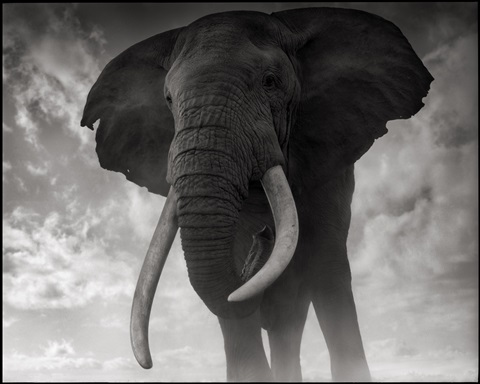 elephants against sky, amboseli by nick brandt