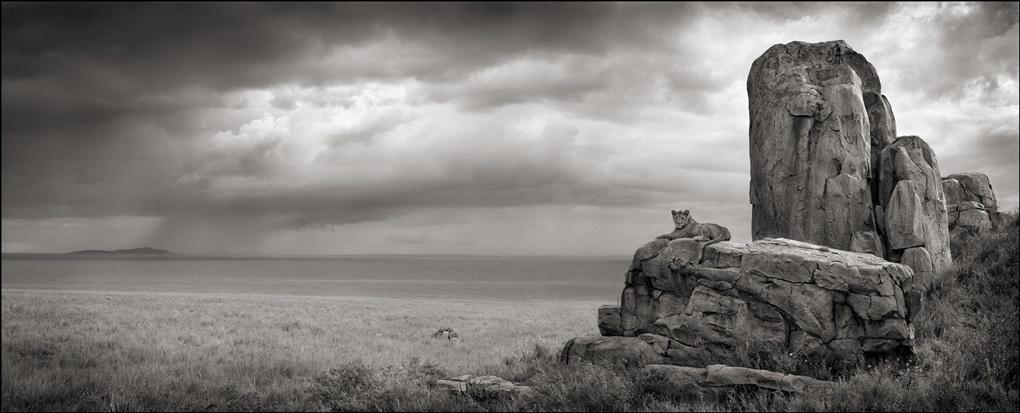 lion with monolith, serengeti by nick brandt