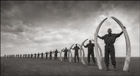 line of rangers with tusks of killed elephants, amboseli by nick brandt