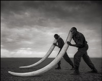 two rangers with tusks of killed elephant, amboseli by nick brandt