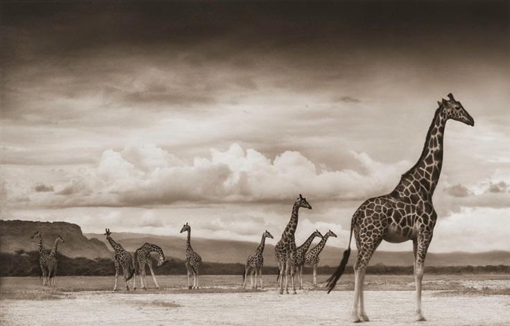 giraffes on lake bed, nakuru by nick brandt
