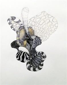 zebra anemone by julia fernandez-pol