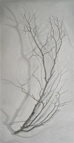 portraiture of a branch by pedro surroca