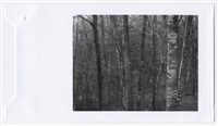 untitled (dense forest) by paul caponigro