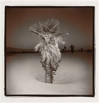 palm #3 by richard misrach