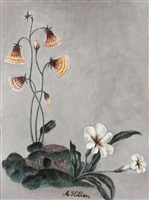 these are still flowers 1913-2013 no. 11 by yang jiechang