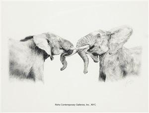 fighting elephants - lumo conservancy, kenya by guy combes