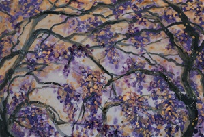 jacaranda by hill & stump
