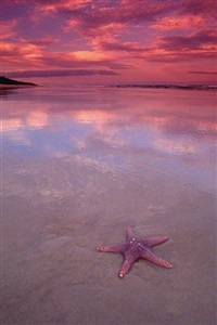 starfish by peter lik
