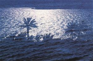 """ohne titel, motiv palmen/meer, aus der ausstellung """"die farbe blau"""" by charlotte march"""