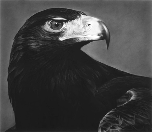 untitled (falcon) by robert longo