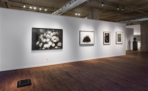 installation view of dark matter, group exhibition