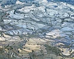 rice terraces, (laohuzui i), yunnan, china by david burdeny