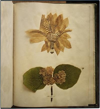 emily dickinson's herbarium, houghton library, harvard university, cambridge, massachusetts by annie leibovitz