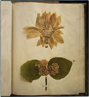 emily dickinson's herbarium, houghton library, harvard university, cambridge, massachusetts by annie leibovitz