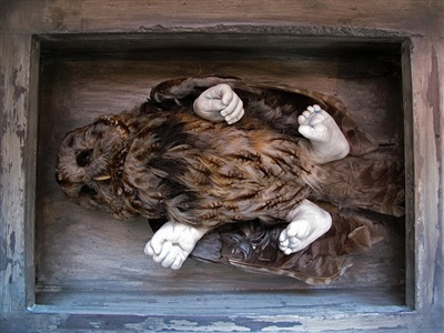 untitled yet (owl in box) by roger ballen