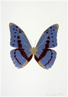 the souls iii - cornflower blue/burgundy/cool gold by damien hirst