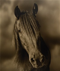 horse #31 by michael eastman
