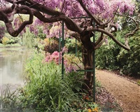 giverny 22, wisteria by the pond by stephen shore