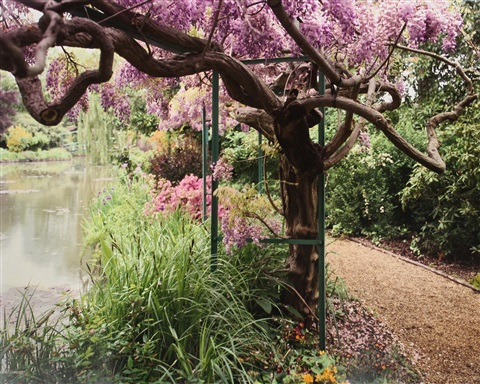 giverny 22 wisteria by the pond by stephen shore