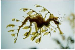 leaves swim by shimabuku