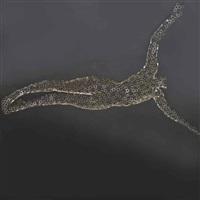 diver damion by rainer lagemann
