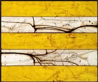 sunbeams (1) by michael kessler