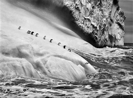 chinstrap penguins dive off icebergs located between zavodovski and visokoi islands in the south sandwich islands by sebastião salgado