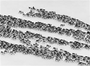 nenets of the siberian arctic, russia by sebastião salgado