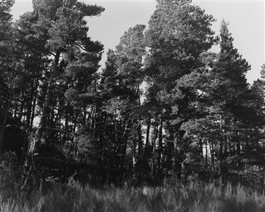 robert adams a road through shore pine by robert adams