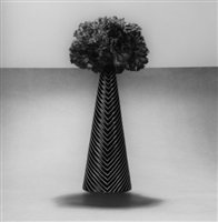 carnations, 1984 by robert mapplethorpe
