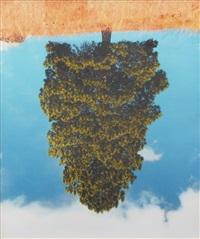 ponderosa pine #3 by rodney graham