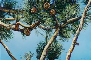 clear mountain pine by john fincher