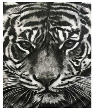 study of tiger head by robert longo