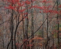 bold autumn forest, tennessee by christopher burkett