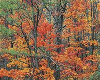 cherokee autumn forest, tennessee by christopher burkett