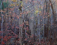 dancing forest. virginia by christopher burkett
