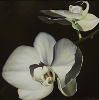 orchid delight by nicora gangi