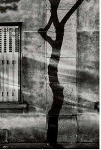 #4, paris tree shadows by michael wolf