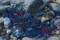 kelp by james welling